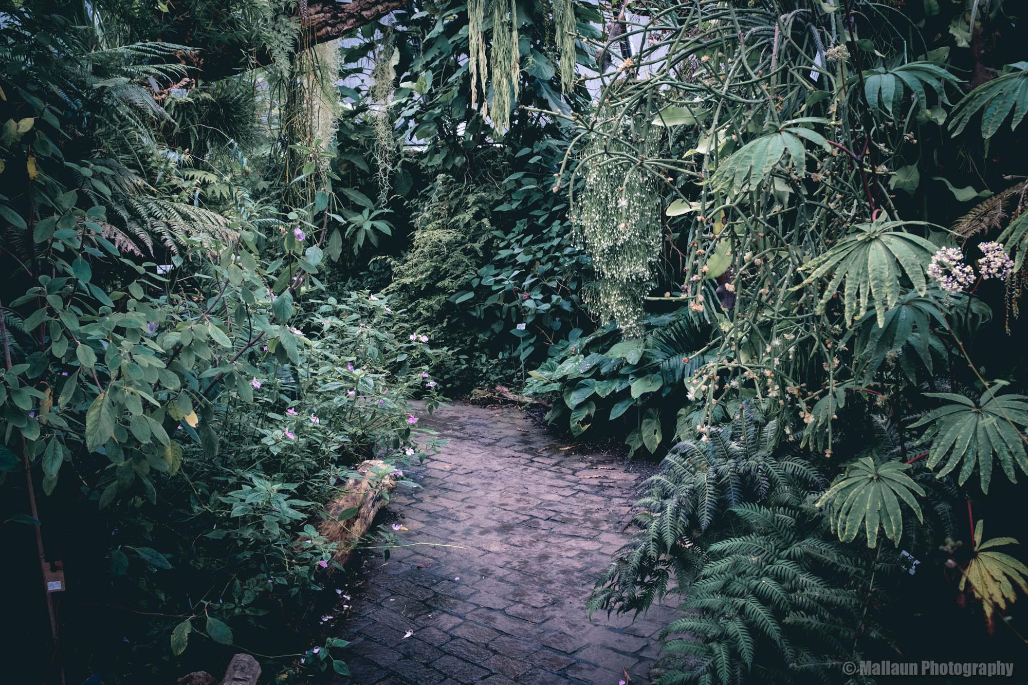 Botanischer Garten Zürich mit der Fuji X100F © Mallaun Photography