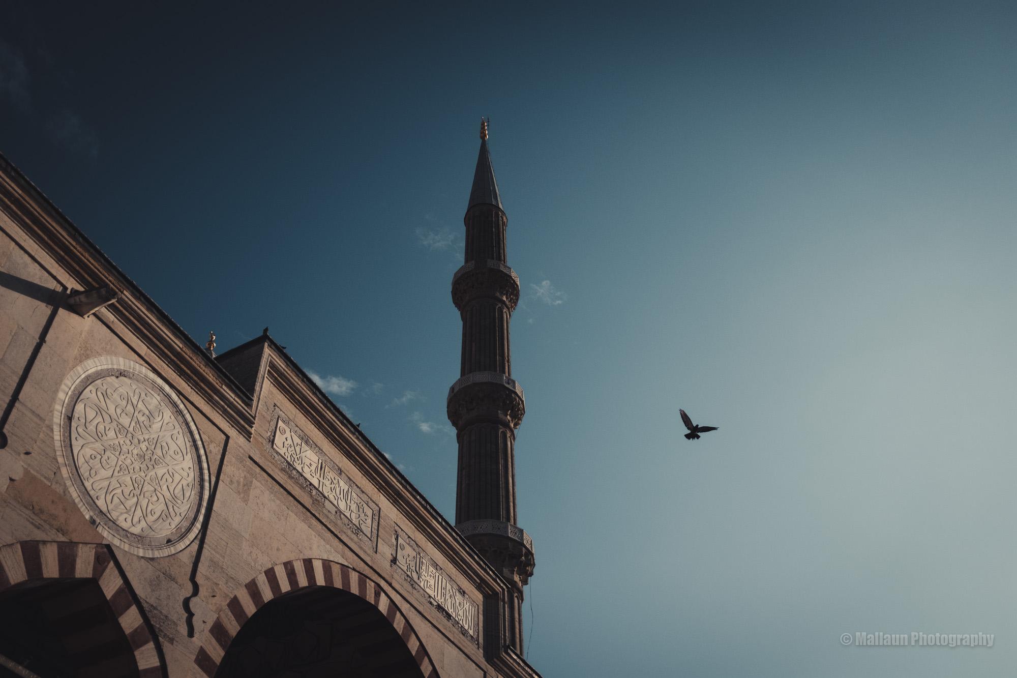 Taube neben Moschee © Mallaun Photography